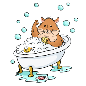 A hamster having a wash