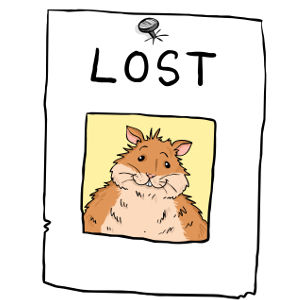 How to find a lost hamster