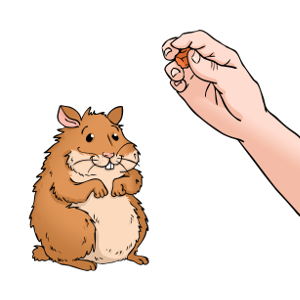 How to train a hamster