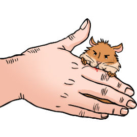 Why do hamsters bite?